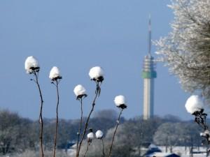 winter in Brook